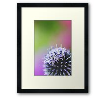 Spiked In The Corner Framed Print