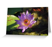 Pink ponds Greeting Card