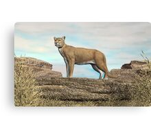 Cougar on the Rocks Canvas Print
