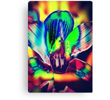4391 Psychedelic Orchid Canvas Print
