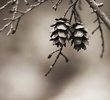 Coniferous Couple by ghd-photography