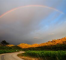 Rainbow Over Vinyard by Katarina Podrug