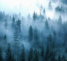 Fog Forest , Yosemite National Park  、USA  by yoshiaki nagashima