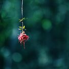 a tiny speck by Andrew Armstrong