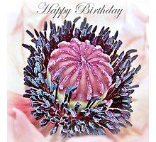 Poppy Pollen Pockets Birthday Card Photographic Print
