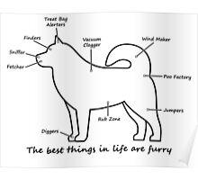 Furry anatomy Poster