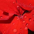 Dewdrops by richeriley