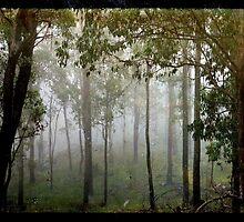 Eucalypts in the Mist by Kitsmumma