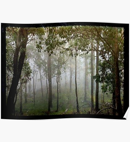 Eucalypts in the Mist Poster