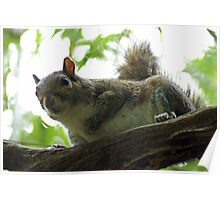 The Curious Squirrel Poster