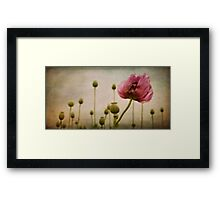 Depth of (Poppy-) Field Framed Print