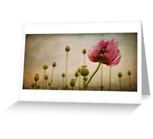 Depth of (Poppy-) Field Greeting Card