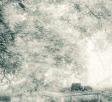 13.6.2010: Garden of Dreams by Petri Volanen