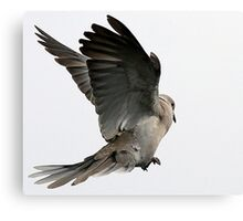 The Wings Of A Dove Canvas Print