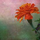 Marigold * Wall Art by AnaCBStudio