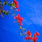 red flower on blue wall by filipmije