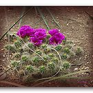 Blooming Dutch Desert  (enlarge) by foppe47