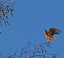 Landing by photojeanic