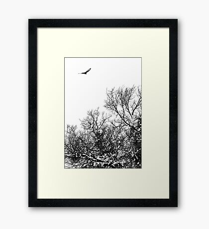 Hawk hunt Framed Print