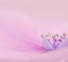 soft pink by Ingz