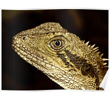 Eastern Water Dragon Portrait Poster