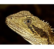 Eastern Water Dragon Portrait Photographic Print