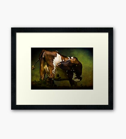 Cows Bum Framed Print