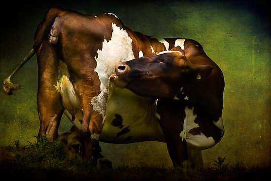 Cows Bum by ajgosling