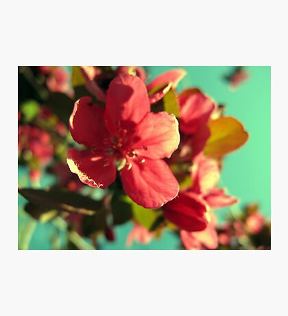 Vintage Bloom Photographic Print