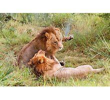 Big Cats Play Photographic Print