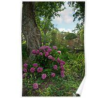 Hydrangeas of Afton Villa St. Francisville Poster