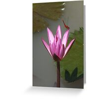 Dragonfly and Lotus Greeting Card