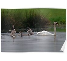 Lovely Mrs Swan and family Poster
