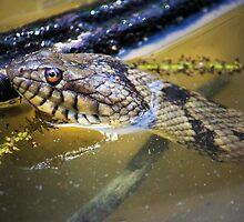 Water Snake by Laura Hoffmann