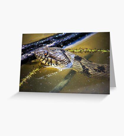 Water Snake Greeting Card