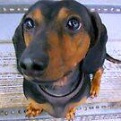 Little Oscar is a Hero! by copperhead
