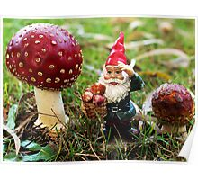 Gnome picking 'shrooms - my garden  Poster