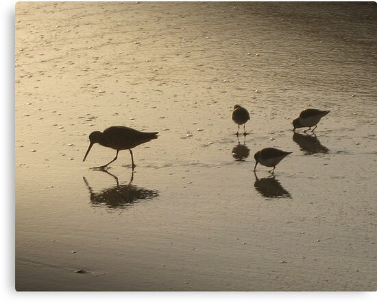 Pfeiffer Beach Sandpipers by jdbussone