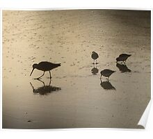 Pfeiffer Beach Sandpipers Poster