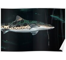 Tiger Shark Newport, Oregon Poster