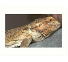 A Tiger Lizard... not my kind of pet.. Art Print