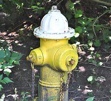 Fire Hydrant by Tamara Lindsey