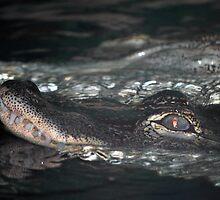 American Alligators by Tamara Lindsey