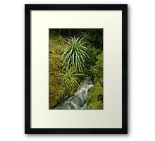 Pandani at Weidordorfers Framed Print