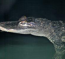 Alligator by Tamara Lindsey