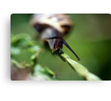 Slither Slither Slither Canvas Print
