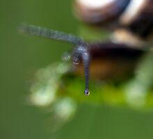 Eye seeee you  by Darren Bailey LRPS