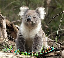 Koala saying Hello by Bev Pascoe
