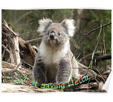 Koala saying Hello Poster