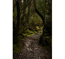 Weindorfers Forest Walk Photographic Print